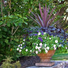 http://delphinium-design.com/files/gimgs/th-12_WEBSITE SUMMER.jpg